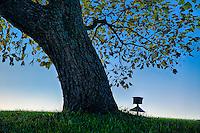 Shady tree and bird house at dusk, Delaware, USA