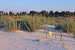 Sea Turtle Nest Site