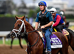 Tamarkuz, owned by Shadwell Stable and trained by Kiaran P. McLaughlin, exercises in preparation for the Breeders' Cup Las Vegas Dirt Mile