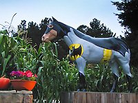 Decked out for Halloween, Old Paint at Lemo's Farm in Half Moon Bay is sporting a cape and emblem befitting the season.