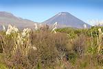 Mt. Nagauruhoe, Active stratovolcano,  Tongariro National Park