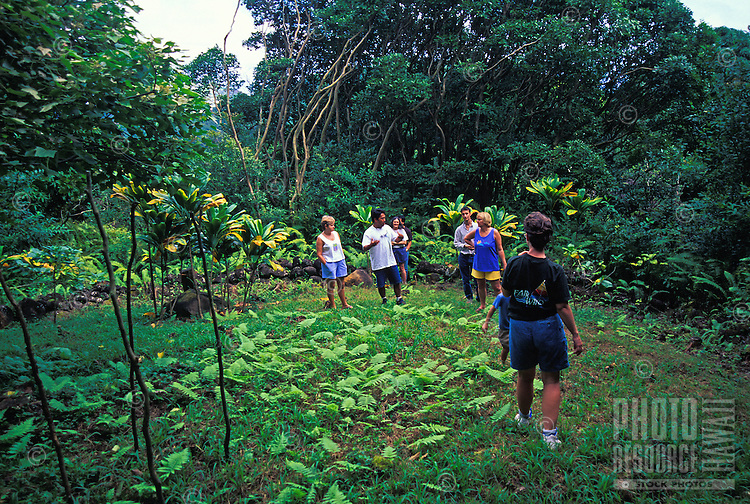 Mauka Makai eco tour of ancient Hawaiian temple off of Puu Waniania heiau near the pali lookout