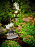 Small waterfall and Monkey Flowers. Bird Creek meadows. Mt. Adams Wildernesss, Washington