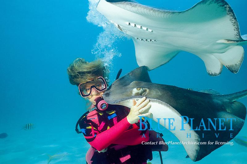 scuba diver and southern stingrays, Dasyatis americana, Stingray City, North Sound, Grand Cayman, British West Indies (Caribbean Sea)