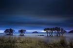 Japanese alder (Alnus japonica), Lake Biwa, Honshu, Japan <br /> Canon EOS-1D X, EF24-70mm f/4L IS USM lens, f/14 for 169 seconds, ISO 100