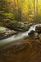 Autumn swirls along Lynn Camp Prong, Tremont