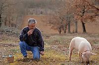 """Europe/France/Midi-Pyrénées/46/Lot/Causse de Limogne/Lalbenque: Mr Raymond Boisset et son cochon truffier """"Kiki"""" lors d'un cavage (recherche des truffes) - AUTORISATION N°255"""