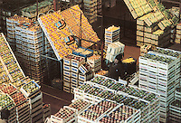- fruits and vegetables general market....- mercato generale ortofrutticolo
