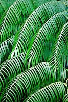 Plants , Costa Rica