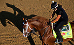 Will Take Charge, trained by D. Wayne Lukas, during morning workouts for the Kentucky Derby at Churchill Downs in Louisville, Kentucky on May 1, 2013.