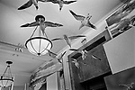 """""""Exit""""<br /> Sea Birds Display<br /> Museum of Natural History<br /> Manhattan, NY<br /> From the """"Captivity"""" series <br /> © Thierry Gourjon-Bieltvedt"""