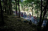 yellow jersey / GC leader Julian Alaphilippe (FRA/Deceuninck - Quick-Step) up the final climb of the day<br /> <br /> Stage 5: Saint-Dié-des-Vosges to Colmar(175km)<br /> 106th Tour de France 2019 (2.UWT)<br /> <br /> ©kramon