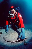 diver and Pacific angel shark, Squatina californica, California, East Pacific Ocean