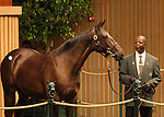 13 September 2010.  Hip #118 Dynaformer - Bank Audit filly sold for $900,000 at the Keeneland September Yearling Sale.   Consigned by Eaton Sales.
