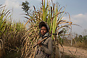 """Cambodia - Kampong Speu Province - Louv Veoun, 39, standing in the sugarcane plantation where she works daily. """"I don't want money, I want my old land back. It is the land of my ancestors"""". Louv Veoun, 39 and mother of 8, was living in a small cottage on her rice field in Kork until March 2010, when she was dispossesed of her two hectares of land and compensated with 25 USD. She was forced to abandon her house and settle in a piece of land belonging to some of her relatives, close to the plantation. Today, she lives in utter poverty together with her family."""