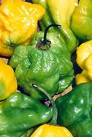 Scotch Bonnet peppers, hot chili peppers