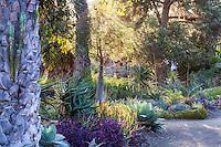 Morning light in drought tolerant California succulent garden beds and borders - Bancroft Garden