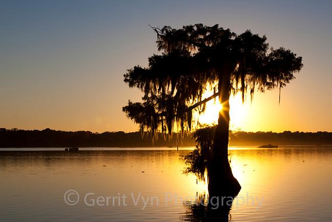 Cypress silhouette at sunset. Lake Martin, Louisana.