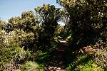 Image Ref: CA963<br /> Location: Bushrangers Bay Track<br /> Date of Shot: 28.09.19
