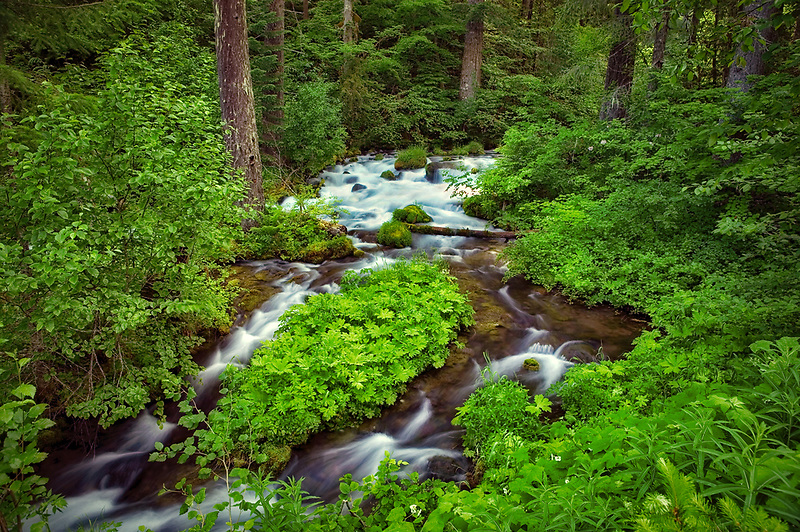 Roaring River in early summer. Oregon