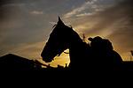 SEPT 22: Horses train at Santa Anita Park in Arcadia, California on September 22, 2019. Evers/Eclipse Sportswire/CSM