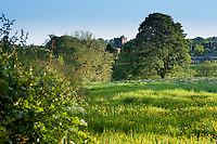 Grass meadow in evening light, Chipping, Lancashire with church in background.