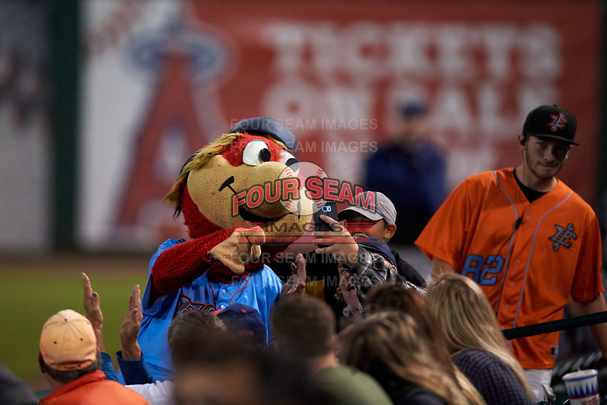 Inland Empire 66ers mascot Bernie takes a selfie with a fan during a California League game against the Lancaster JetHawks at San Manuel Stadium on May 18, 2018 in San Bernardino, California. Lancaster defeated Inland Empire 5-3. (Zachary Lucy/Four Seam Images)