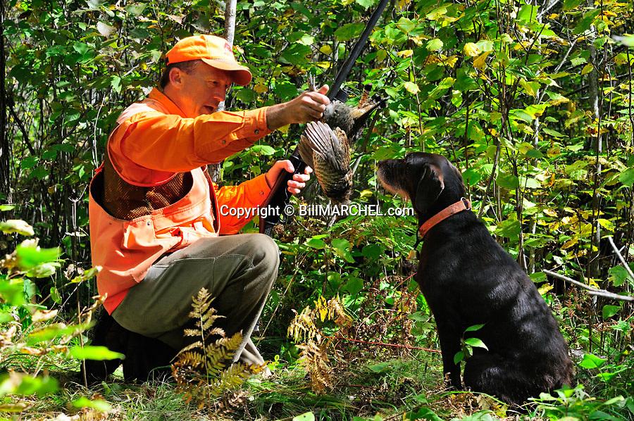 00515-074.09 Ruffed Grouse hunter takes bird from dog pudelpointer on edge of heavy early season cover.  Hunt, aspen, retrieve.