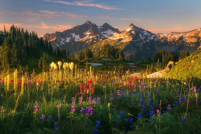 Beautiful soft light on wildflower laden meadows looking towards the Tatoosh Range, Mt. Rainier National Park.<br /> <br /> ARTIST CHOICE: 30x45 Lumachrome/Acylic