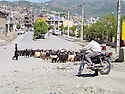 Iran 2004<br /> Dans Sardacht, la rue avec chevres, voitures et moto<br /> Iran 2004<br /> Sardacht: a street with goats, cars and a motorbike