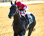ELMONT, NY-June 30:  Midnight Bisou (#2 ) handily won the Mother Goose stakes at Belmont Park on June 30, 2018.  Bisou is trained by Steve Asmussen and ridden by Triple Crown jockey Mike Smith. (Dan Heary/Eclipsesportswire/Getty Images).