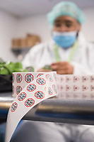 "A worker applies safety labels to dram bottles containing high-dose ""g-cap"" gel capsules at the production and packaging facility for Garden Remedies, a medical cannabis producer, in Fitchburg, Massachusetts, USA, on Fri., Feb. 22, 2019. The bottles have a variety of safety labels, including stickers that read ""Not safe for children"" and ""Contains THC"" in addition to other safety features."
