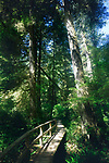 Pacific Rim National Park Rainforest trail in Tofino, Vancouver Island, BC, Canada. Image © MaximImages, License at https://www.maximimages.com
