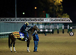 Gio Ponti, trained by Christophe Clement and to be ridden by Ramon Dominguez, exercises in preparation for the 2011 Breeders' Cup at Churchill Downs on November 2, 2011.