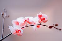 Orchids by ProPhotoSTL.com