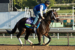 ARCADIA, CA  OCTOBER 30: Breeders' Cup Mile entrant Lucullan, trained by Kiaran P. McLaughlin, \exercises in preparation for the Breeders' Cup World Championships at Santa Anita Park in Arcadia, California on October 30, 2019.  (Photo by Casey Phillips/Eclipse Sportswire/CSM)