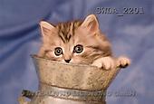 Carl, ANIMALS, photos(SWLA2201,#A#) Katzen, gatos