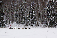Sunday February 28, 2010   Merissa Osmar on the trail shorlty before winning the Junior Iditarod Sled Dog Race. Willow , AK