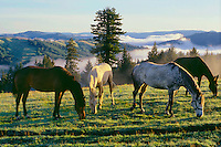 Horses on Schoolhouse Prairie<br />