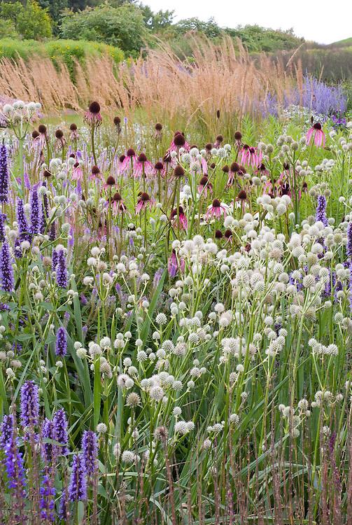 Heirloom and old-fashioned plants, flowers: Agastache Black Adder + Eryngium yuccifolium + Echinacea pallida _ ornamental grass, Piet Oudolf border design