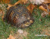 1002-0812  Male Eastern Box Turtle (Tucked in Shell), Terrapene carolina © David Kuhn/Dwight Kuhn Photography.