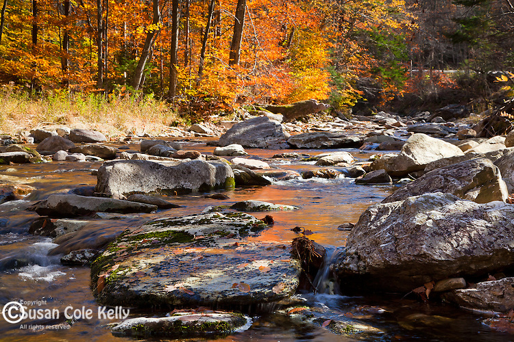 Autumn color along Roaring Brook in the Green Mountain National Forest, VT, USA
