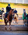 October 31, 2020: Channel Maker, trained by trainer William I. Mott, exercises in preparation for the Breeders' Cup Turf at  at Keeneland Racetrack in Lexington, Kentucky on October 31, 2020. Alex Evers/Eclipse Sportswire/Breeders Cup