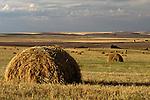 Farm land with baled wheat in field with barn sunrise Eastern Washington State USA.