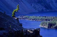 A single croced tree in Crater Lake national park in Oregon, USA