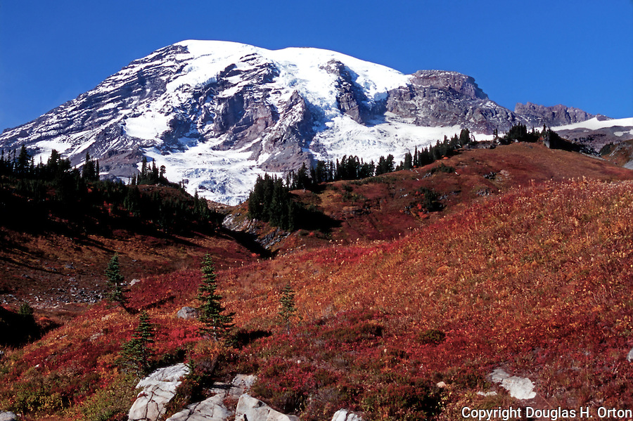 Mt. Rainier seen from Paradise Meadow over headwaters of Paradise Creek