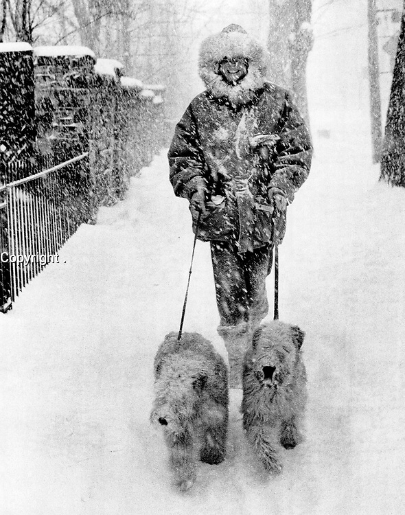 1987 FILE PHOTO - ARCHIVES -<br /> <br /> the snow didn't keep Margaretha Baillie from walking her Wheaton Terriers; Sandy and Hugo.<br /> <br /> 1987<br /> <br /> PHOTO :  Erin Comb - Toronto Star Archives - AQP