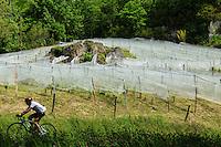 France, Corrèze (19), Lissac-sur-Couze, vigne cultivé en agriculture biologique, AB, et filets de protection, domaine Terres de Causse // France, Correze, Lissac sur Couze, vines grown in organic farming, and protection nets, Domain Terre de Causse