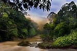 Dawn / sunrise over the Segama River, with mist hanging over lowland Dipterocarp rainforest. Heart of Danum Valley, Sabah, Borneo.