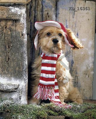 Interlitho, Alberto, ANIMALS, dogs, photos, pup wall, KL16361,#a# Hunde, perros
